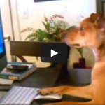 Montagskino – Hunde und Katzen, die wie Menschen handeln